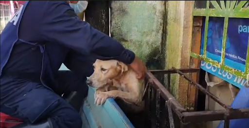 dog saved during mexico floods