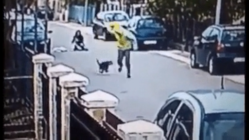 dog saves woman from getting robbed