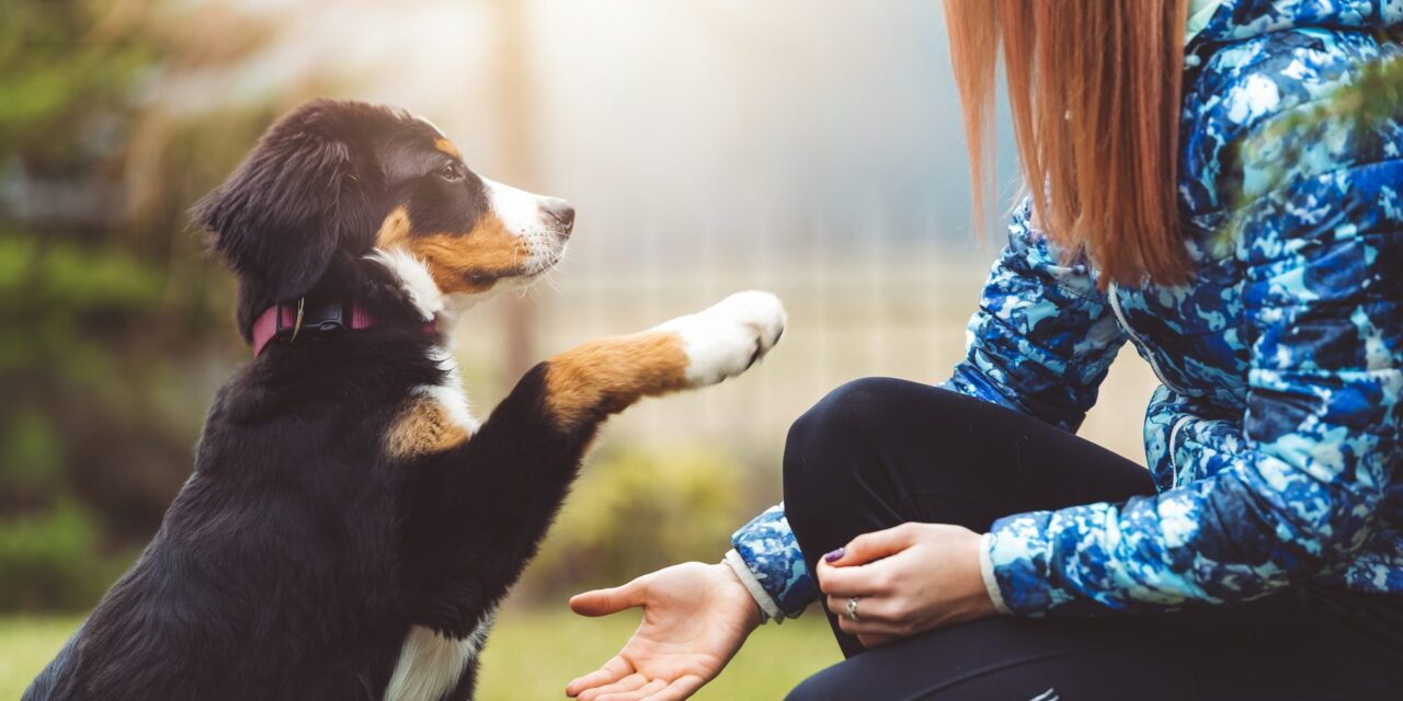 https://ilovemydogsomuch.com/wp-content/uploads/2021/08/dog-training-1280x640.jpg