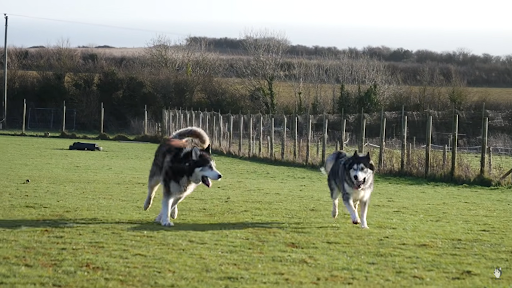 https://ilovemydogsomuch.com/wp-content/uploads/2021/08/husky-reunited-with-his-best-friend.png