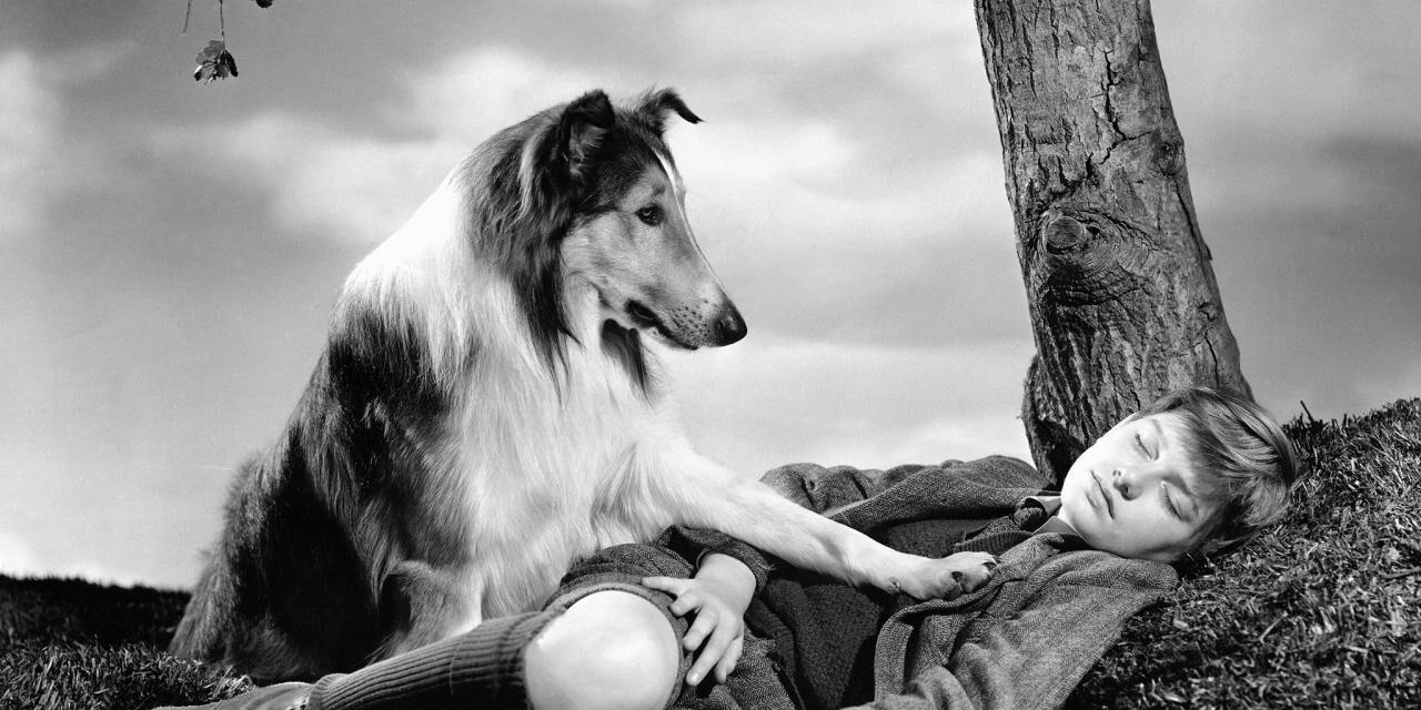 https://ilovemydogsomuch.com/wp-content/uploads/2021/08/lassie-1280x640.jpg