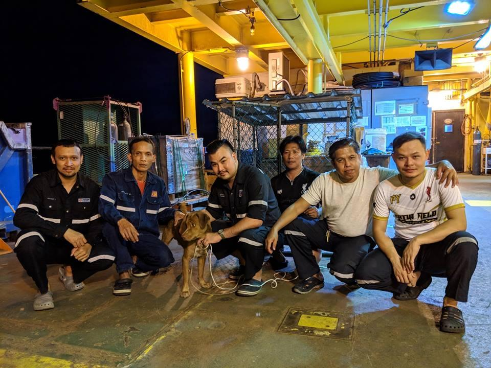 oil rig workers rescue lost dog