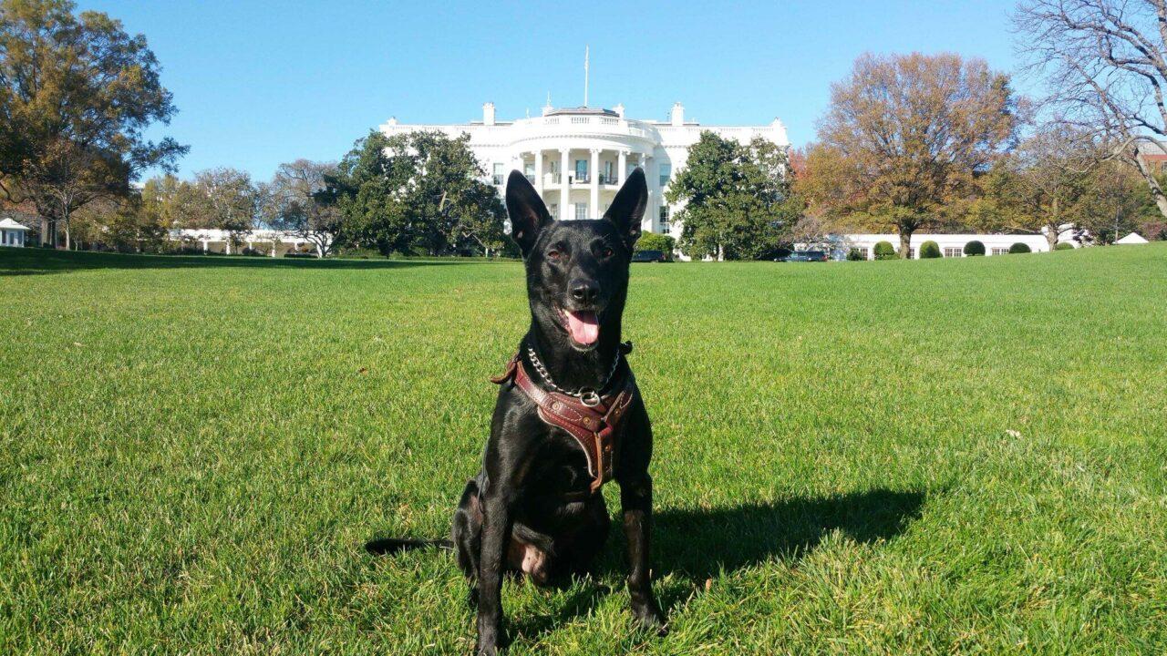 https://ilovemydogsomuch.com/wp-content/uploads/2021/08/presidential-dogs-1280x720.jpg