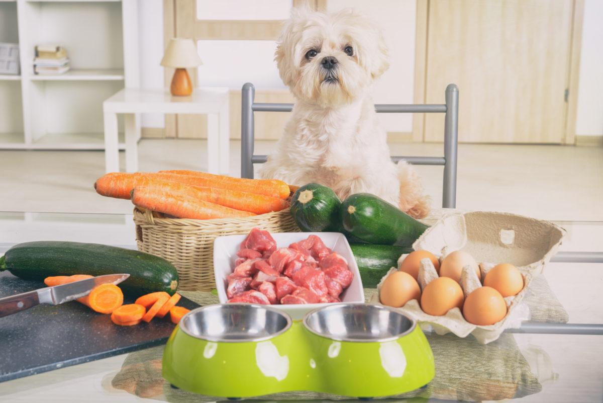 https://ilovemydogsomuch.com/wp-content/uploads/2021/08/raw-food-for-dogs.jpg