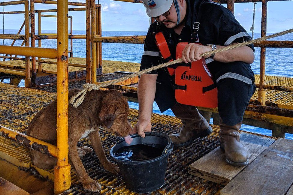 stranded dog found by oil rig workers in thailand
