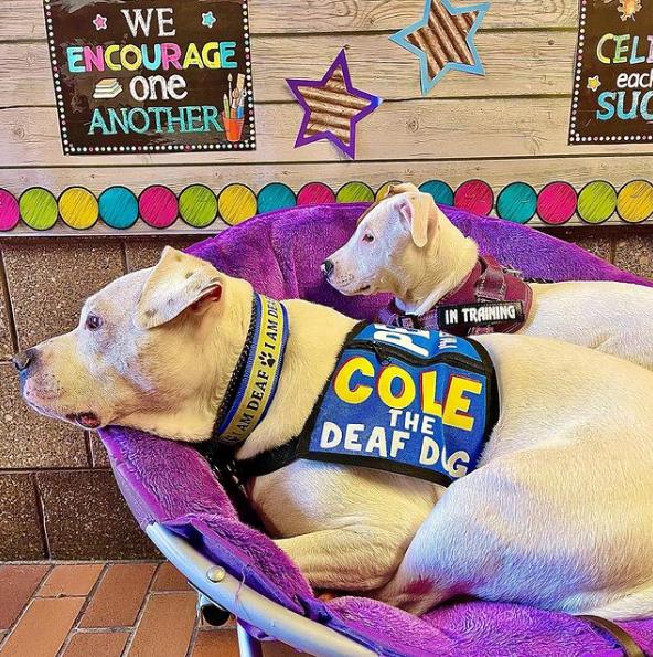 Cole The Deaf Dog on Instagram 2