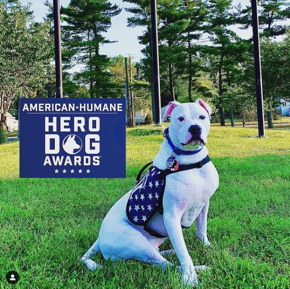 Cole The Deaf Dog on Instagram