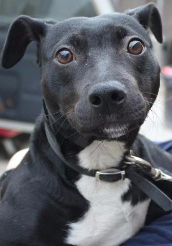 Eli adopt a senior dog