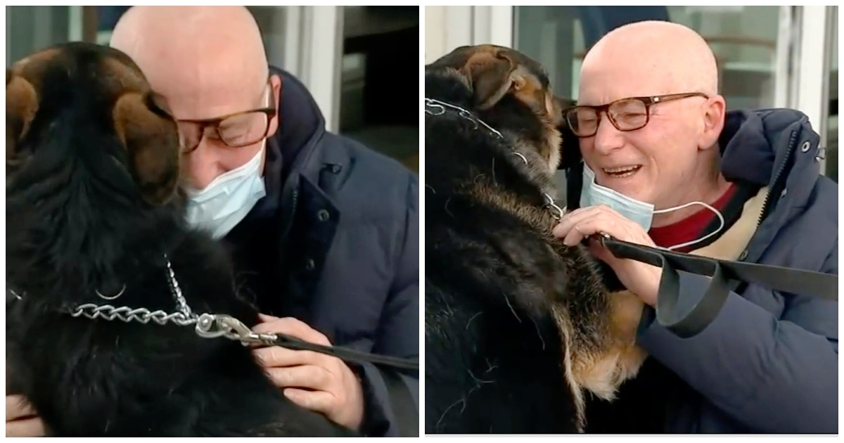 https://ilovemydogsomuch.com/wp-content/uploads/2021/09/German-Shepherd-saved-man-during-a-stroke.jpg