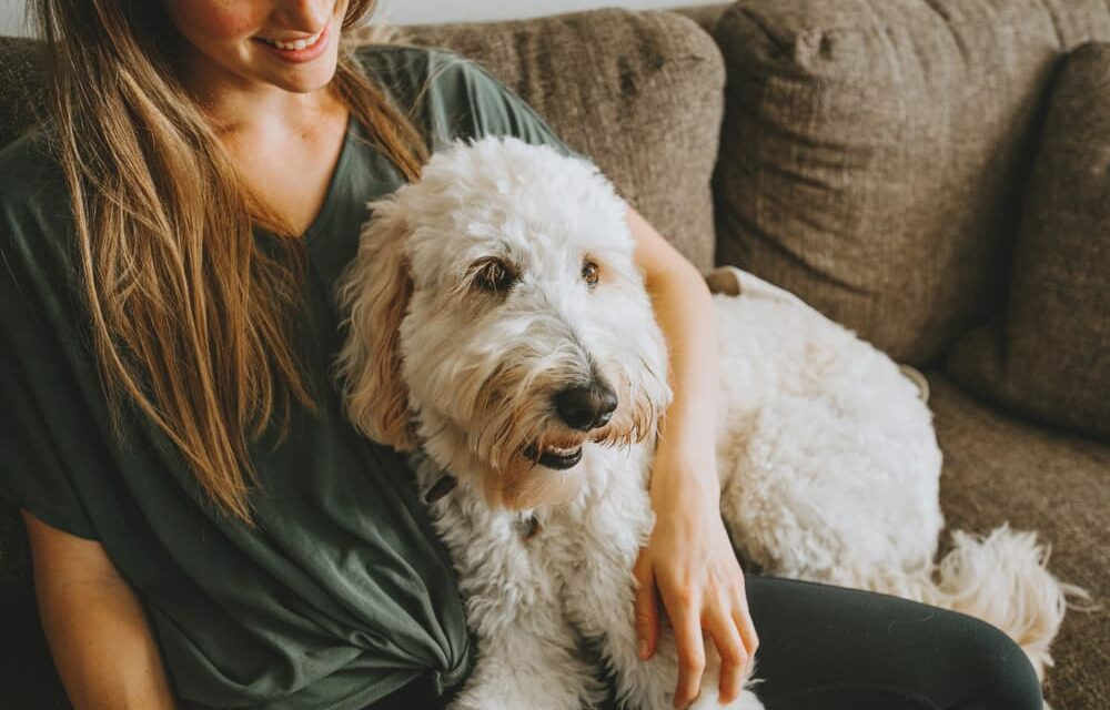 https://ilovemydogsomuch.com/wp-content/uploads/2021/09/TrustedHousesitters-Main-1000x640.jpg
