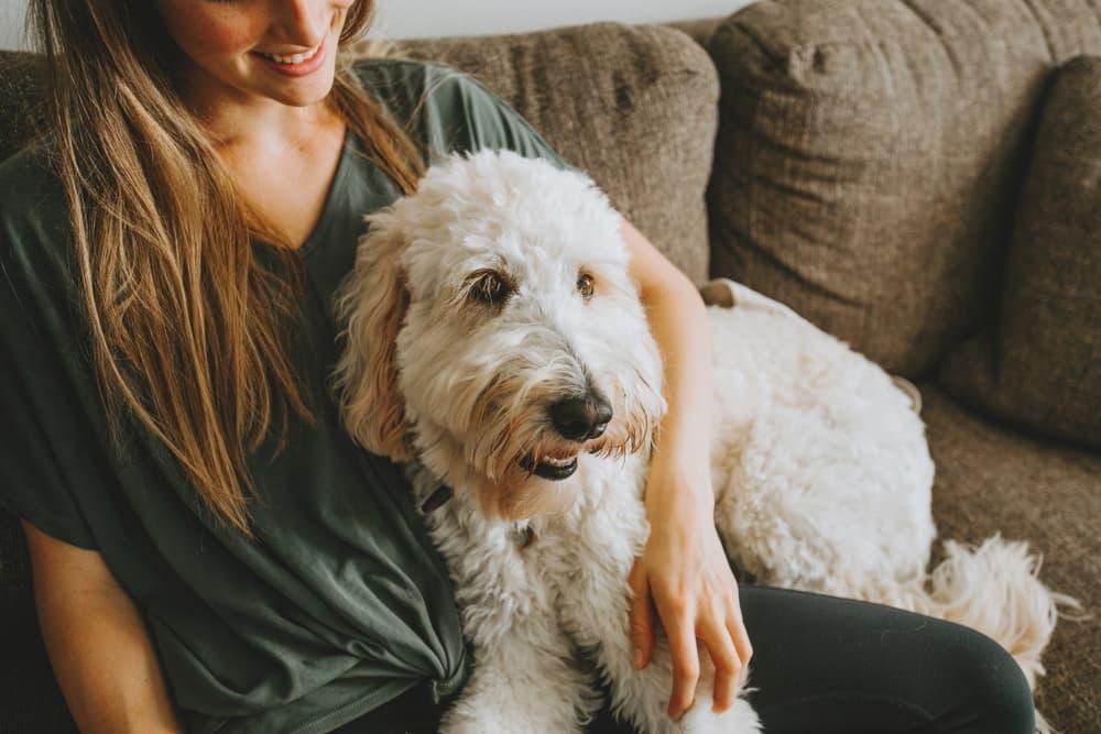 https://ilovemydogsomuch.com/wp-content/uploads/2021/09/TrustedHousesitters-Main.jpg