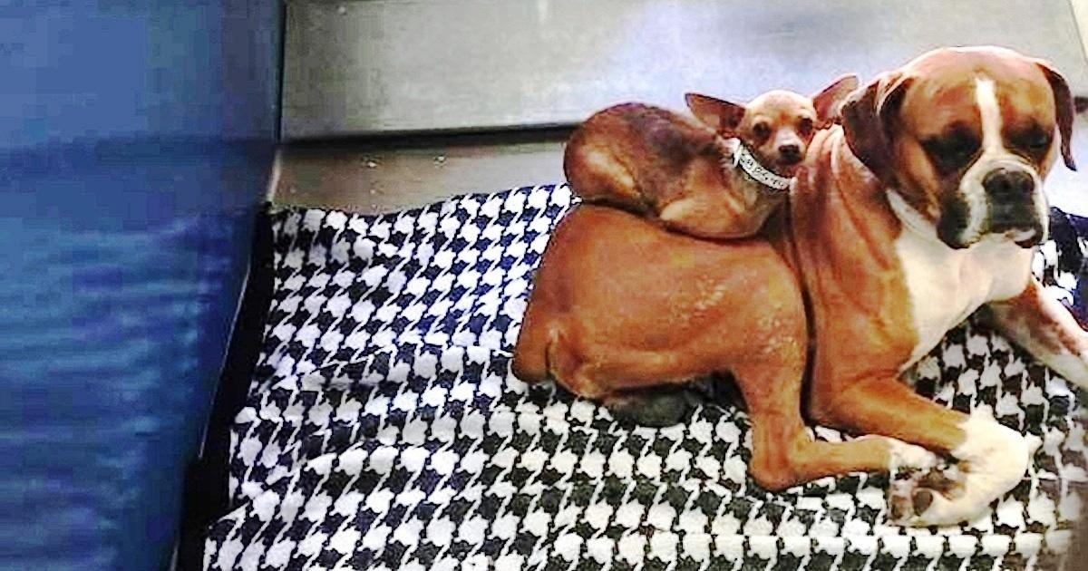 https://ilovemydogsomuch.com/wp-content/uploads/2021/09/adopting-bonded-dogs.jpg