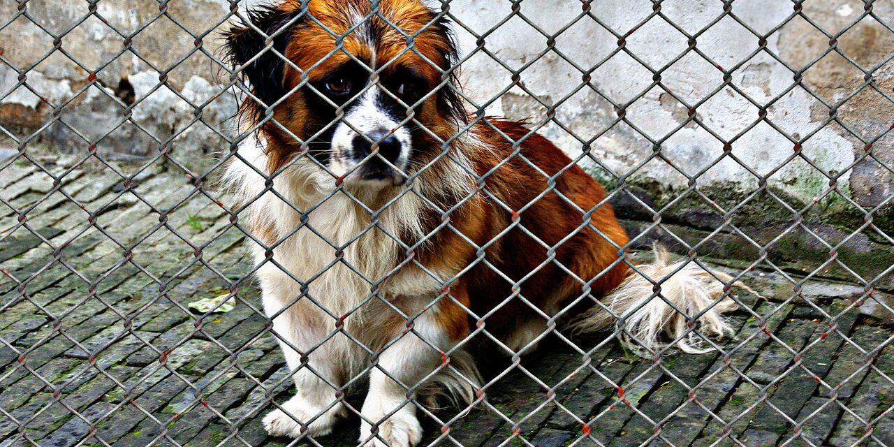 https://ilovemydogsomuch.com/wp-content/uploads/2021/09/animal-welfare-dog-rescue-adopt-1280x640.jpg
