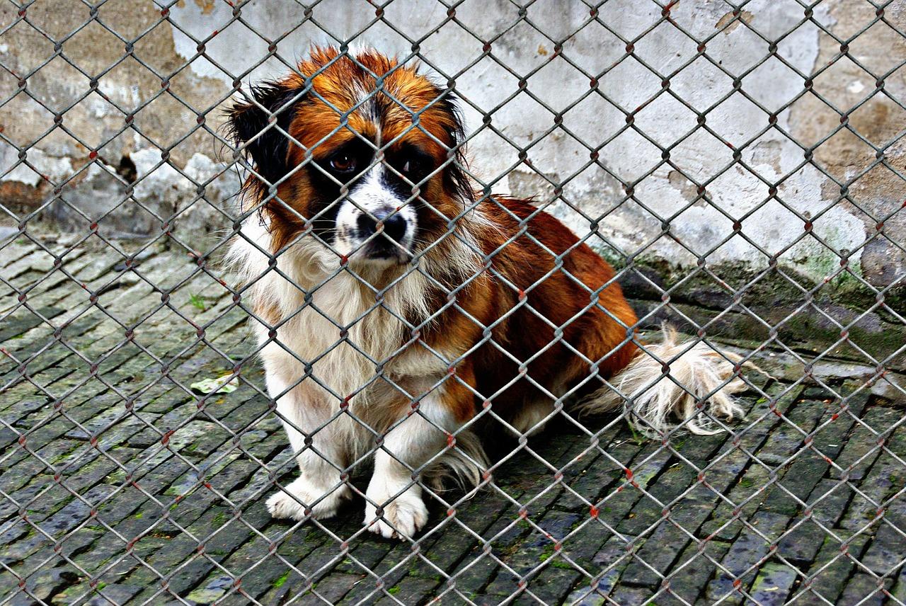 https://ilovemydogsomuch.com/wp-content/uploads/2021/09/animal-welfare-dog-rescue-adopt.jpg