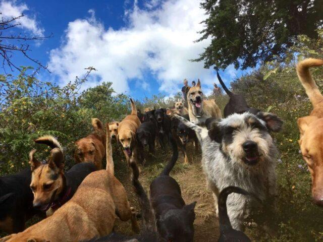 biggest dog shelter