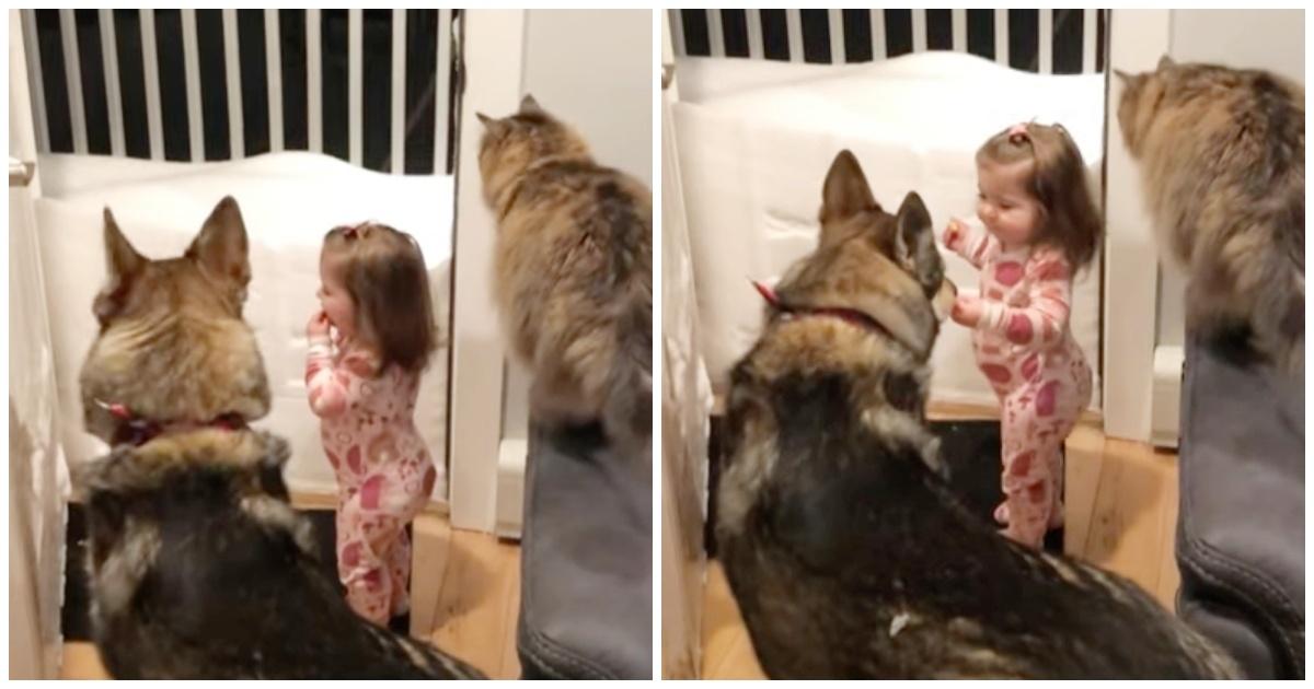 https://ilovemydogsomuch.com/wp-content/uploads/2021/09/cat-and-dog-teach-girl-to-sleep.jpg
