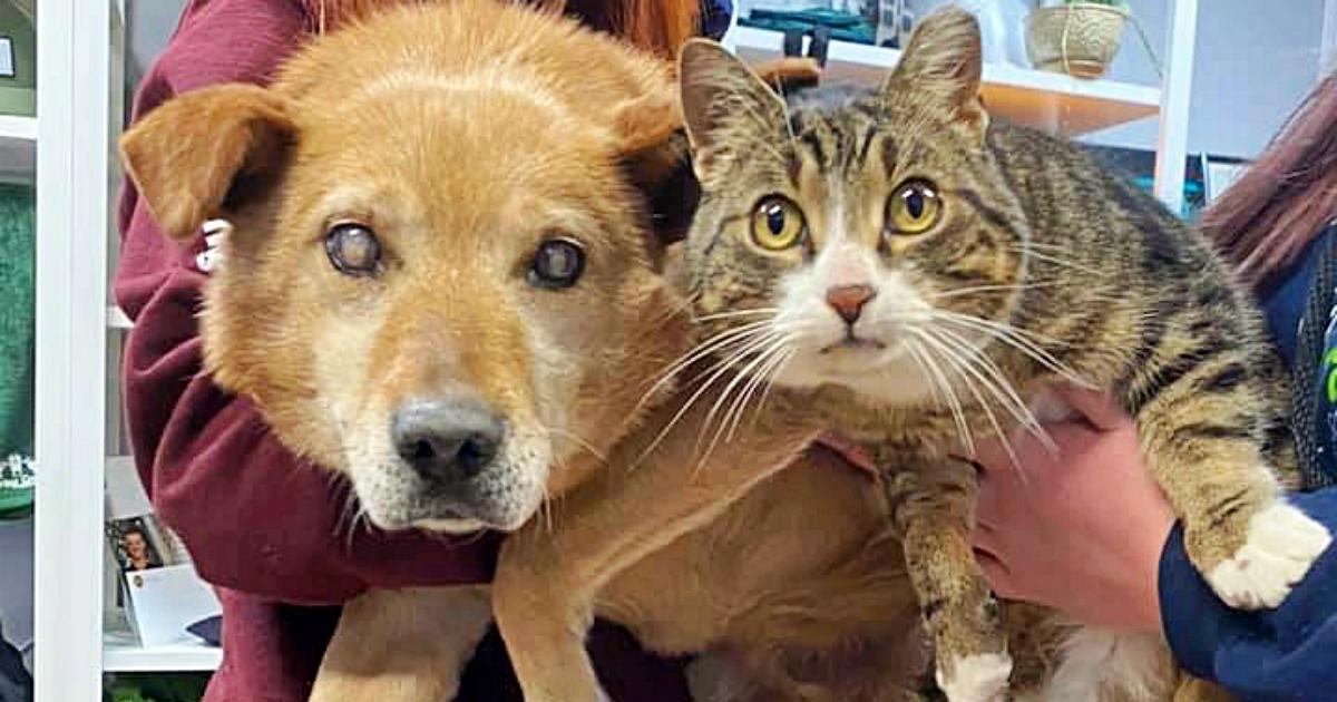 https://ilovemydogsomuch.com/wp-content/uploads/2021/09/cat-guides-blind-dog.jpg