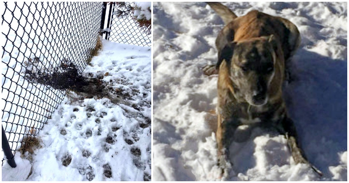 https://ilovemydogsomuch.com/wp-content/uploads/2021/09/dog-escapes-from-blizzard.jpg