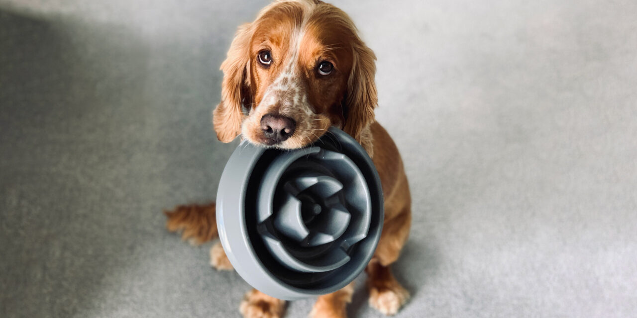 https://ilovemydogsomuch.com/wp-content/uploads/2021/09/dog-food-recall-news-1280x640.jpg
