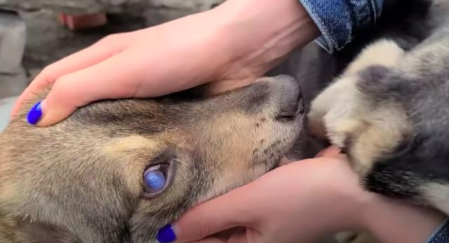dog rescue story dog eyes cloudy