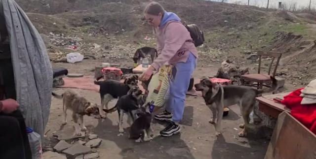 dog rescue story homeless man