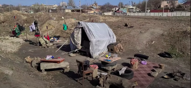 dog rescue story homeless man stray dogs