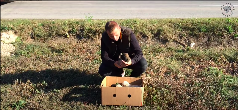 https://ilovemydogsomuch.com/wp-content/uploads/2021/09/dog-rescue-story-of-dogs-in-cardboard-boxes-featured.png