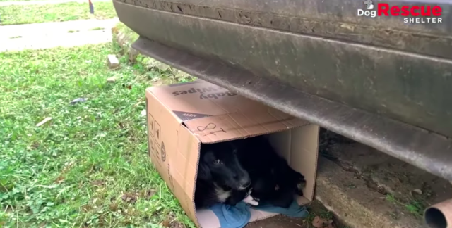 dog rescue story of mama and pups 1