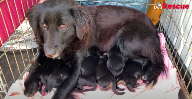 dog rescue story of mama and pups 4