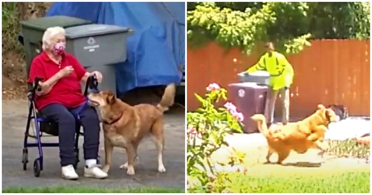 https://ilovemydogsomuch.com/wp-content/uploads/2021/09/dog-rescuing-elderly-owner.jpg