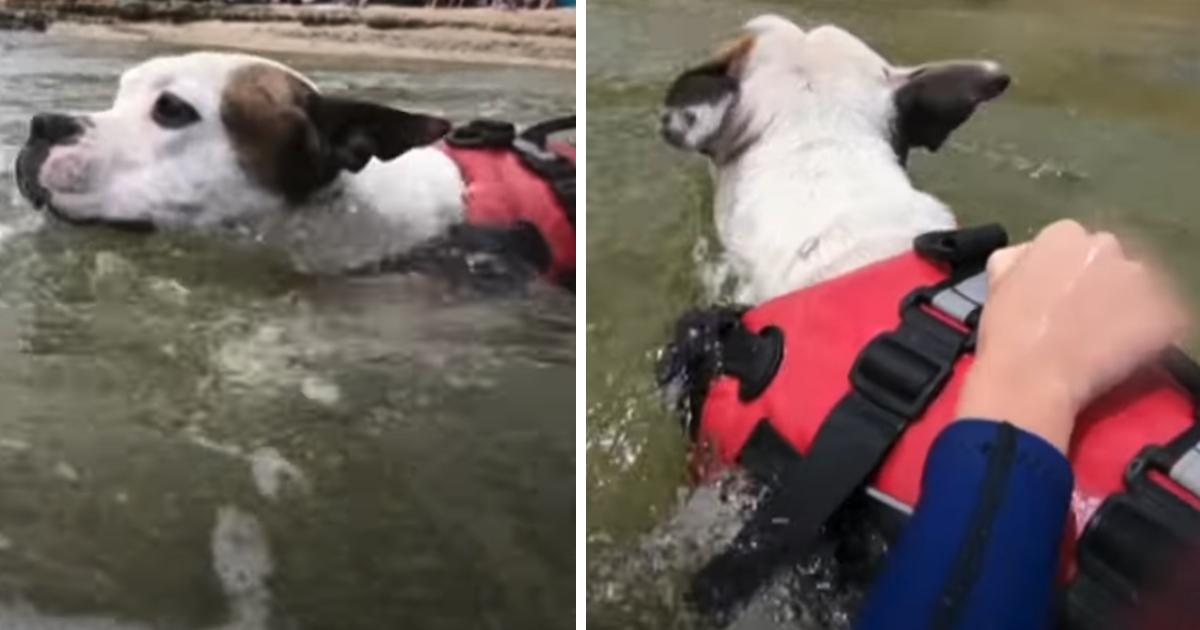 https://ilovemydogsomuch.com/wp-content/uploads/2021/09/dog-saves-drowning-boy.jpg