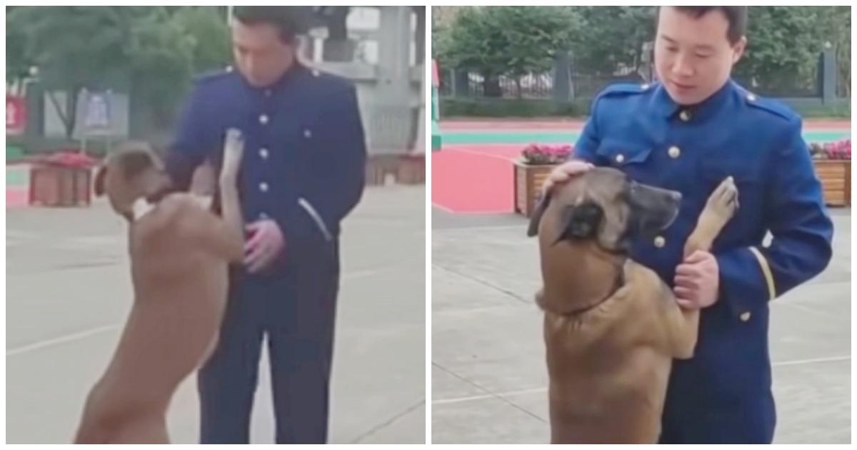 https://ilovemydogsomuch.com/wp-content/uploads/2021/09/dog-saying-goodbye-to-trainer.jpg