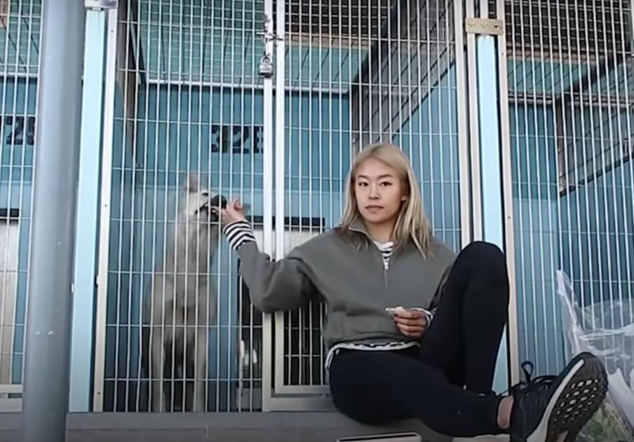 https://ilovemydogsomuch.com/wp-content/uploads/2021/09/dog-story-ara-adopted-dog.png