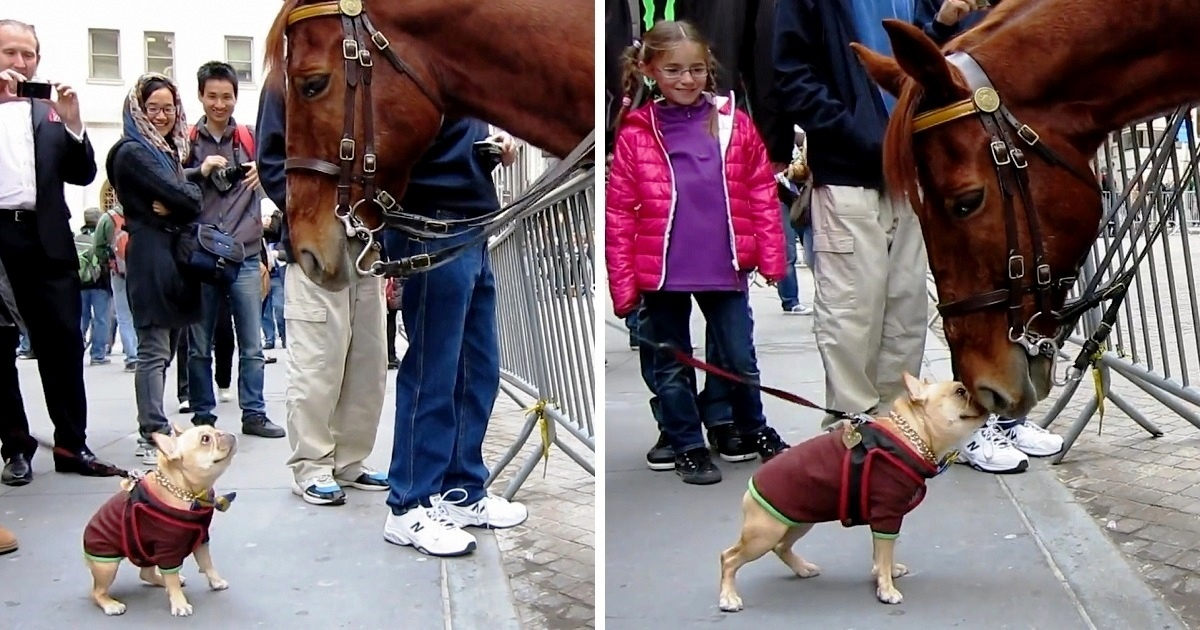 https://ilovemydogsomuch.com/wp-content/uploads/2021/09/frenchie-plays-with-a-horse.jpg