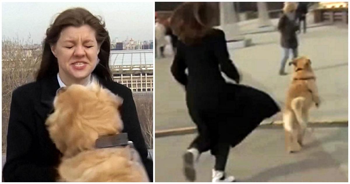 https://ilovemydogsomuch.com/wp-content/uploads/2021/09/golden-retriever-steals-reporters-mic.jpg