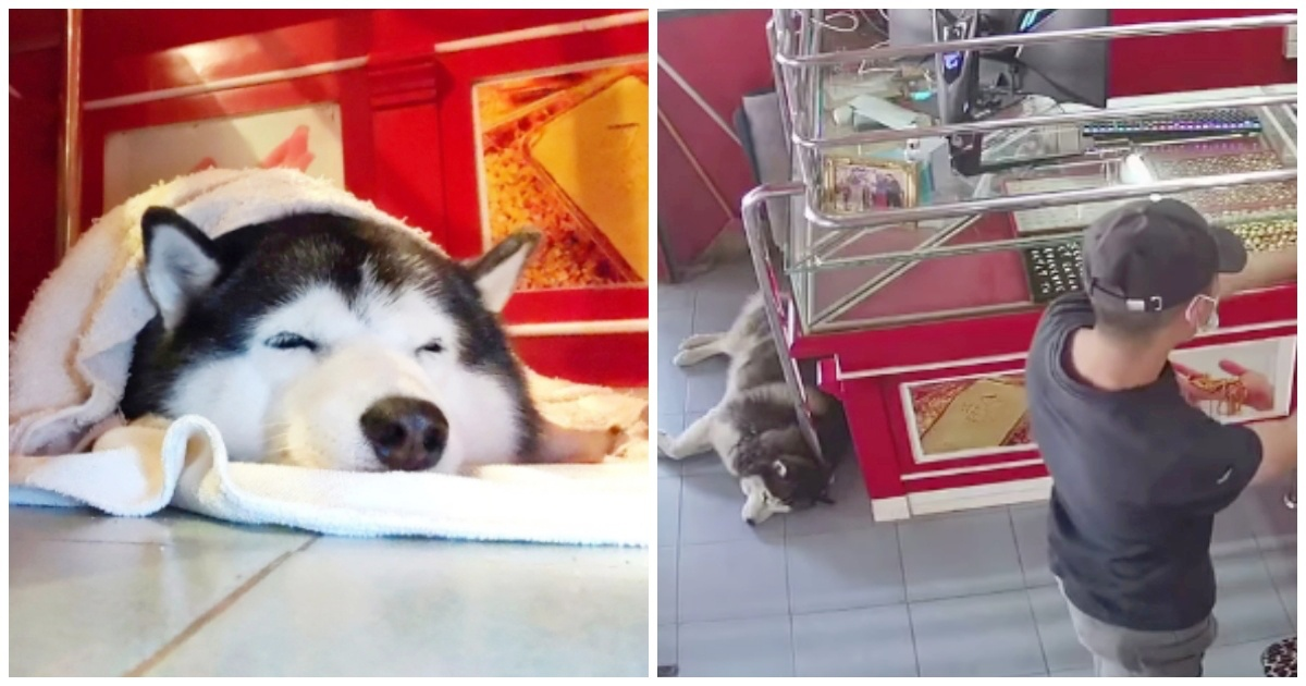 https://ilovemydogsomuch.com/wp-content/uploads/2021/09/guard-dog-sleeps-during-robbery.jpg