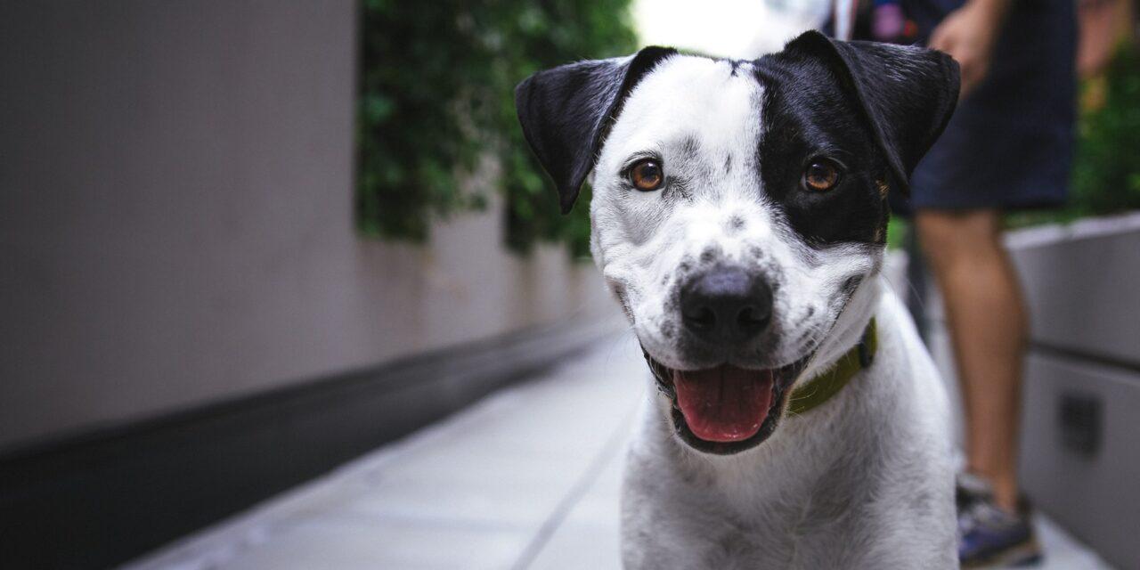 https://ilovemydogsomuch.com/wp-content/uploads/2021/09/happy-smiling-dog-1280x640.jpg