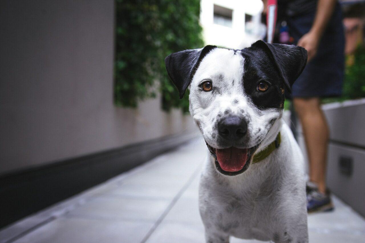 https://ilovemydogsomuch.com/wp-content/uploads/2021/09/happy-smiling-dog-1280x853.jpg