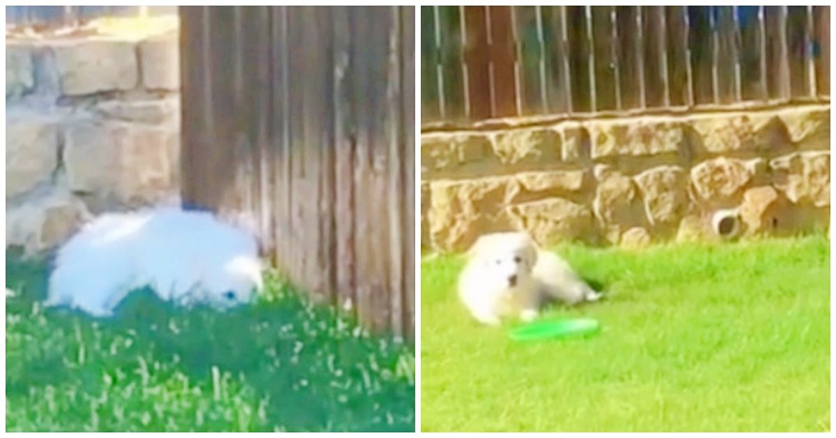 https://ilovemydogsomuch.com/wp-content/uploads/2021/09/heartwarming-dog-video-of-a-puppy.jpg