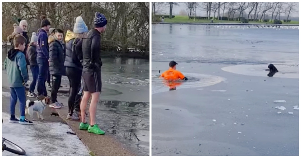 https://ilovemydogsomuch.com/wp-content/uploads/2021/09/jogger-attempts-to-save-dog-in-frozen-lake.jpg