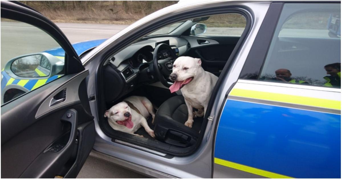 https://ilovemydogsomuch.com/wp-content/uploads/2021/09/lost-dogs-enter-police-car.jpg