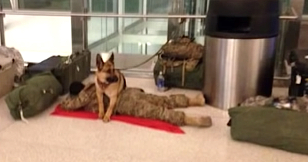 https://ilovemydogsomuch.com/wp-content/uploads/2021/09/loyal-dog-takes-care-of-napping-soldier.jpeg