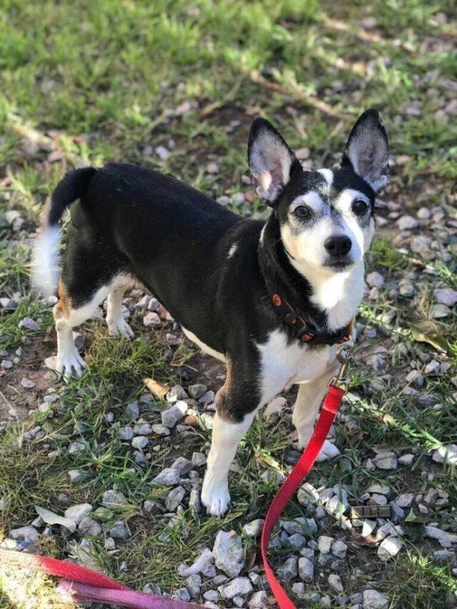 mojo adopt a senior dog