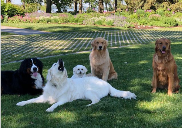 oliver with other dogs