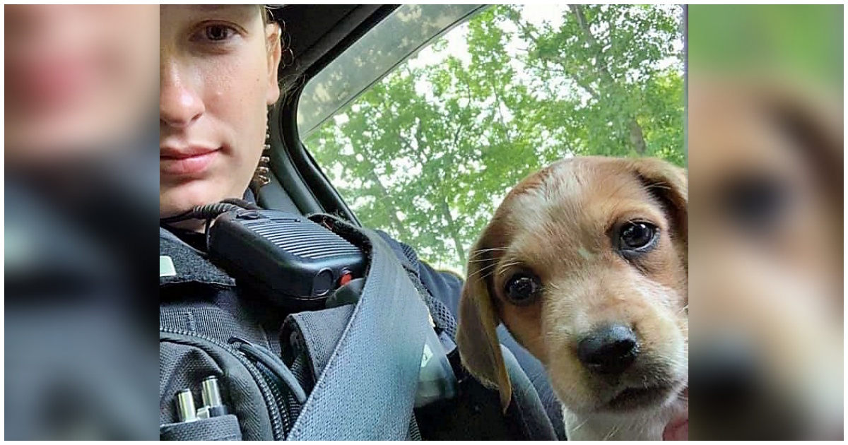 https://ilovemydogsomuch.com/wp-content/uploads/2021/09/police-officer-adopts-injured-dog.jpg