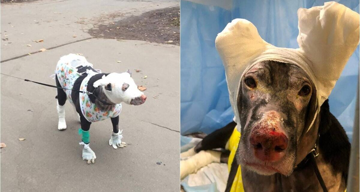 https://ilovemydogsomuch.com/wp-content/uploads/2021/09/pregnant-dog-saves-patients-from-fire-1200x640.jpg