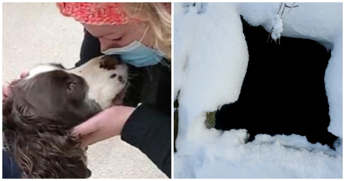 https://ilovemydogsomuch.com/wp-content/uploads/2021/09/rescued-dog-in-silo.jpg