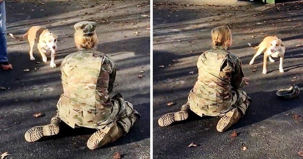 https://ilovemydogsomuch.com/wp-content/uploads/2021/09/reunited-dog-and-army-mom.jpg