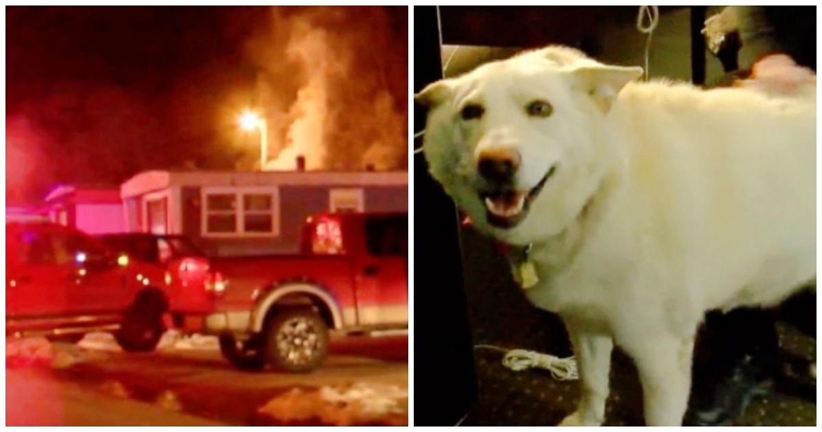 https://ilovemydogsomuch.com/wp-content/uploads/2021/09/service-dog-saved-owner-from-fire.jpg