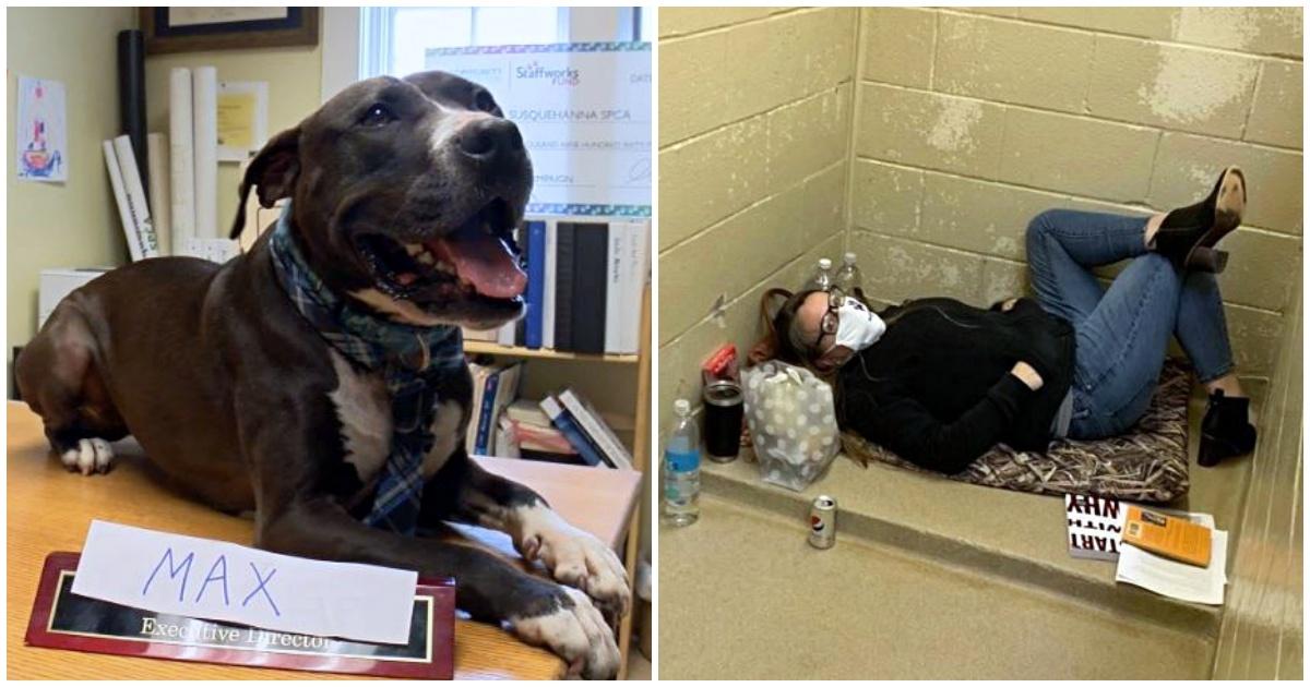https://ilovemydogsomuch.com/wp-content/uploads/2021/09/shelter-dog-gets-adopted.jpg